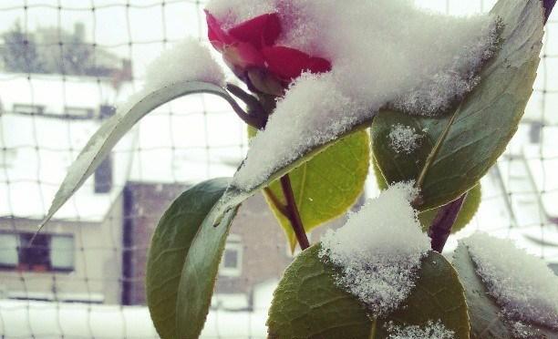 Noch mehr Schnee,  da hãtte ich auch im Allgäu bleiben können ;)