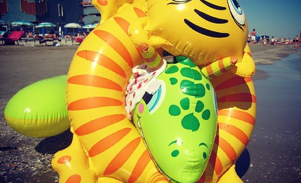 Ringkampf zwischen Tiger und Schlange